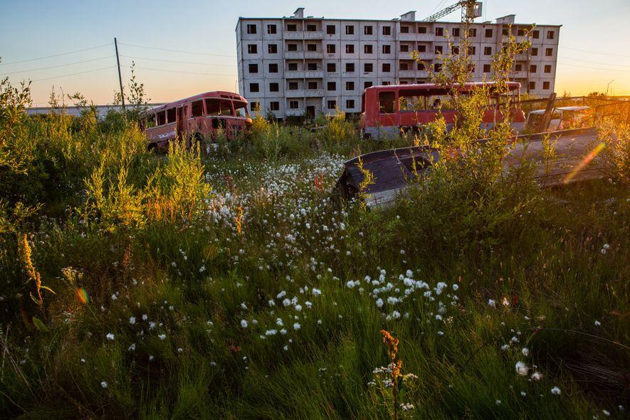 A grama Foxtail, as flores fireweed (Chamaenerion angustifolium) e flores de algodão são abundantes em Cherskiy, na Rússia, durante o verão. A cidade é totalmente construída sobre o permafrost. Os prédios são construídos sobre estacas de concreto com o encanamento acima do solo para levar em consideração mudanças na topografia conforme o permafrost derrete.
