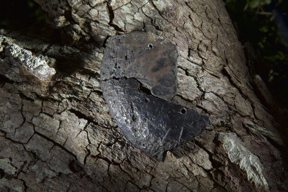 Este pedaço de cobre europeu provavelmente foi importado para o comércio com nativos americanos. Como o ...