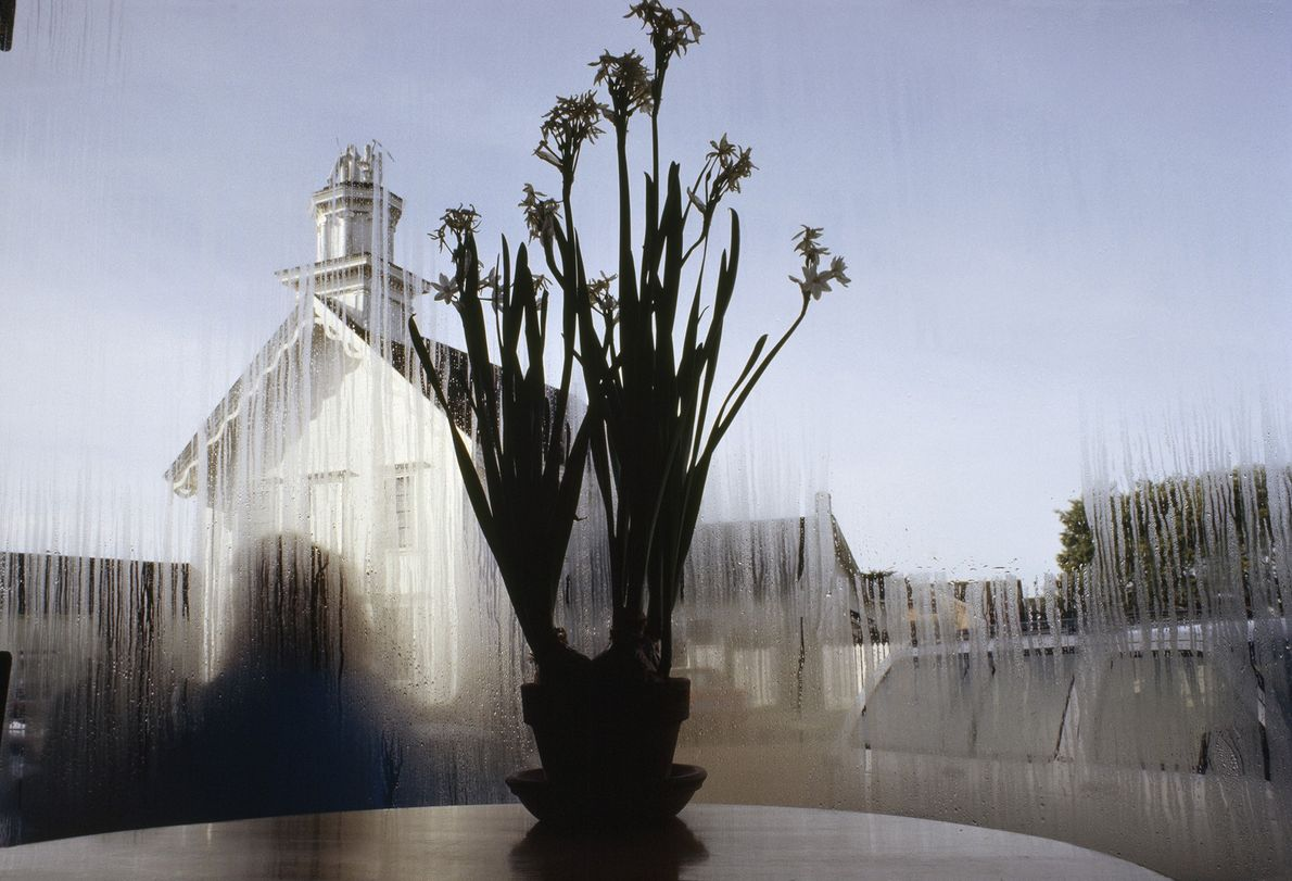 mesa com flores na Califórnia