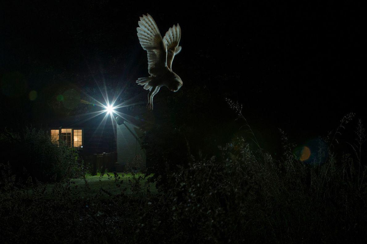 fotografo-de-aves-do-ano