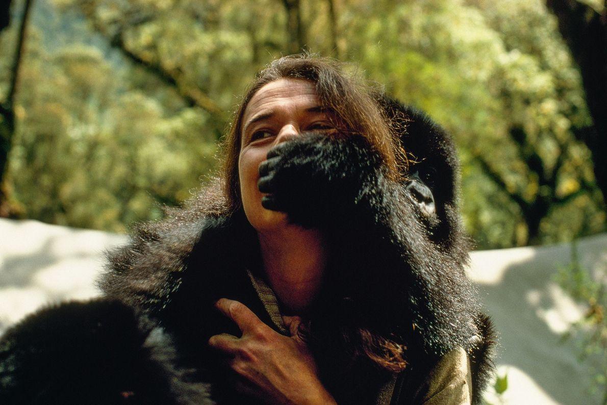 A percepção dos gorilas como violentos era comum na época em que Fossey começou seus estudos. ...