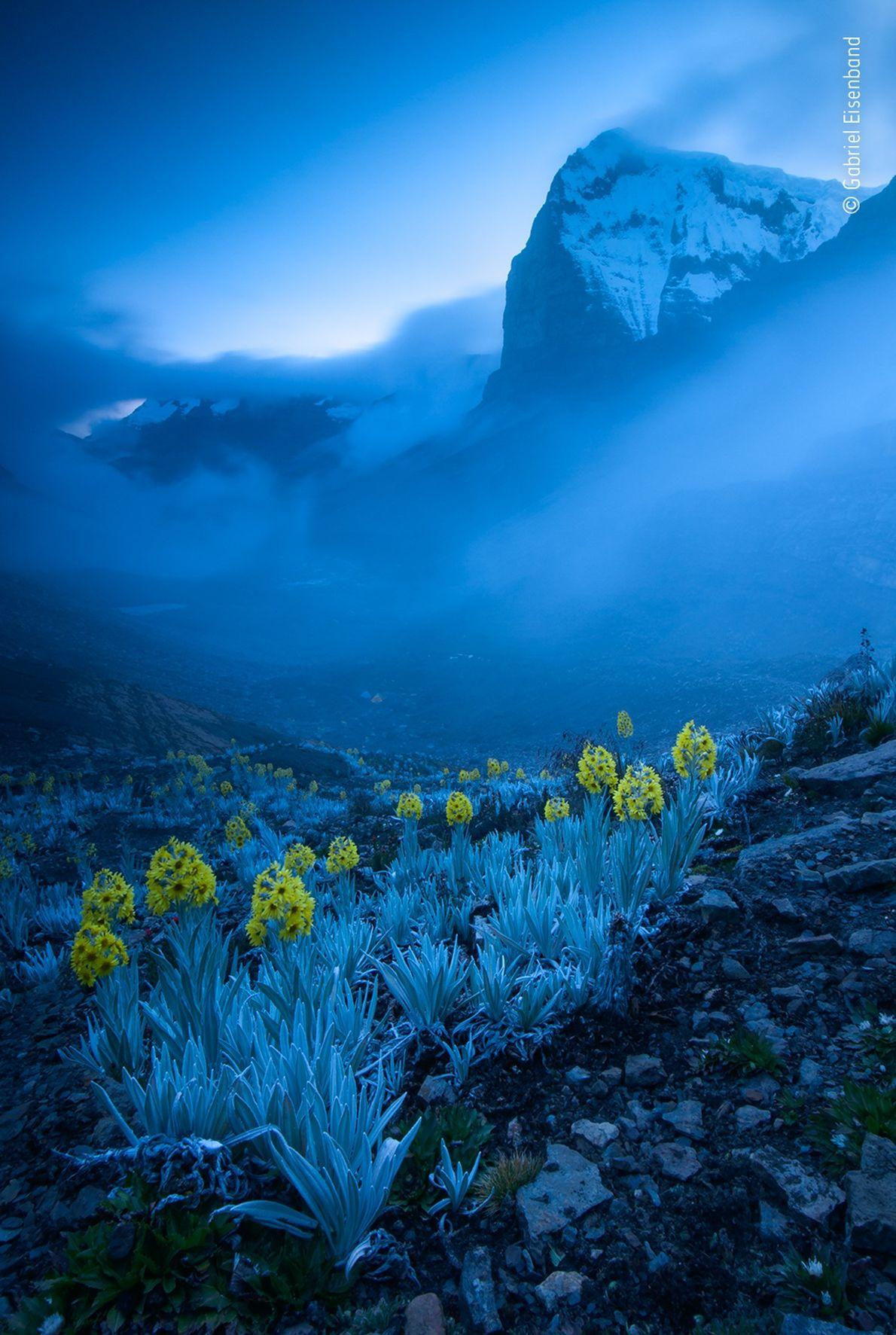 Gabriel Eisenband fez esta fotografia de plantas de arnica branca, encontradas exclusivamente na Colômbia, que ganhou ...