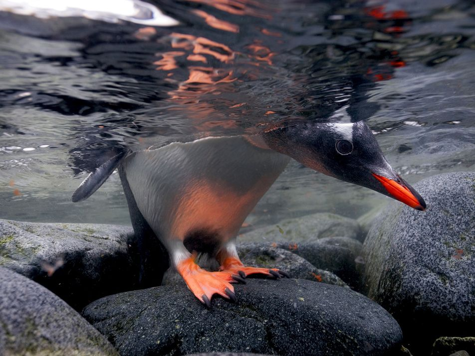 Fotos mostram como é a vida dos animais polares nos lugares mais frios da Terra