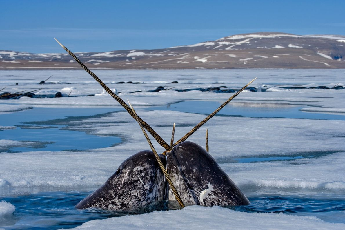 galeria-de-fotos-de-baleias