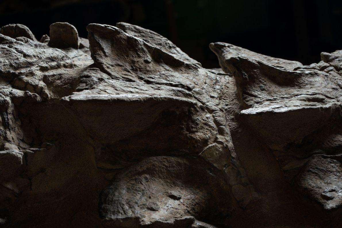 nodossauro-nova-especie-de-dinossauro-fossil-incrivel-06