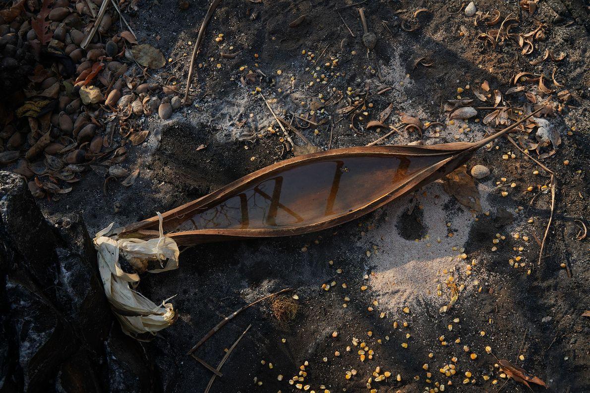 A equipe de resgate deixa água em palmeiras, assim como sementes, para os animais sobreviventes. Quando ...