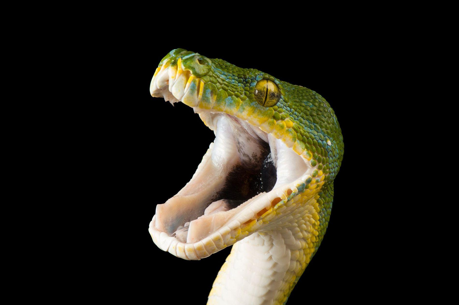 Se você tem medo de cobra, não abra esta galeria de fotos