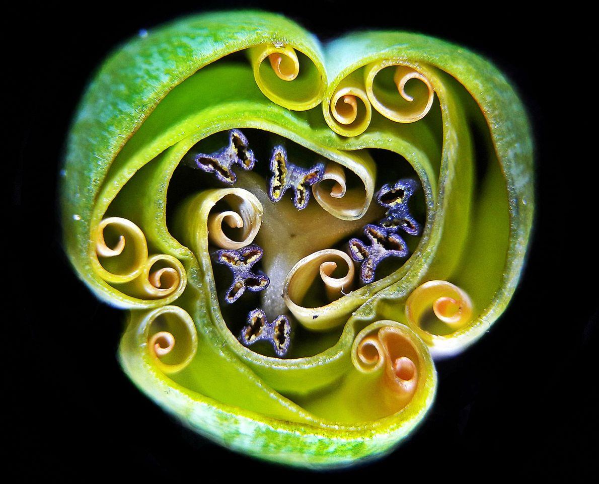 Este ornamento mágico verde é um acessório de cristal encantado? Não: na verdade, é um bulbo ...