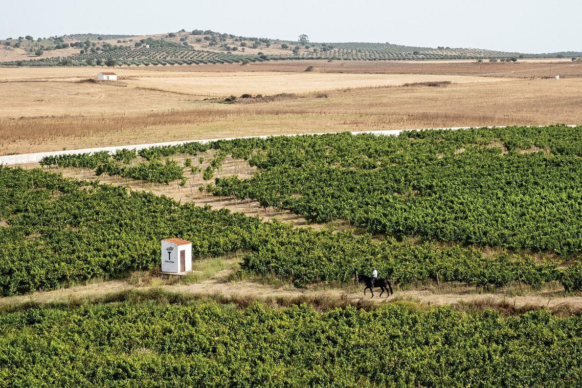 A região do Alentejo, em Portugal, possui florestas de cortiça, ruínas romanas e vinhas, como a ...