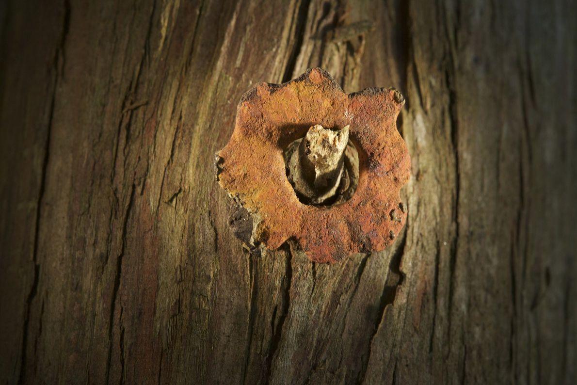 Este pequeno ilhós de cobre, descoberto em julho em Cape Creek, em Hatteras, pode ter sido ...
