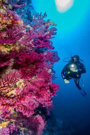 Mergulhador passa por parede subaquática ornamentada com corais coloridos perto de Alonissos, ilha próxima à embarcação ...
