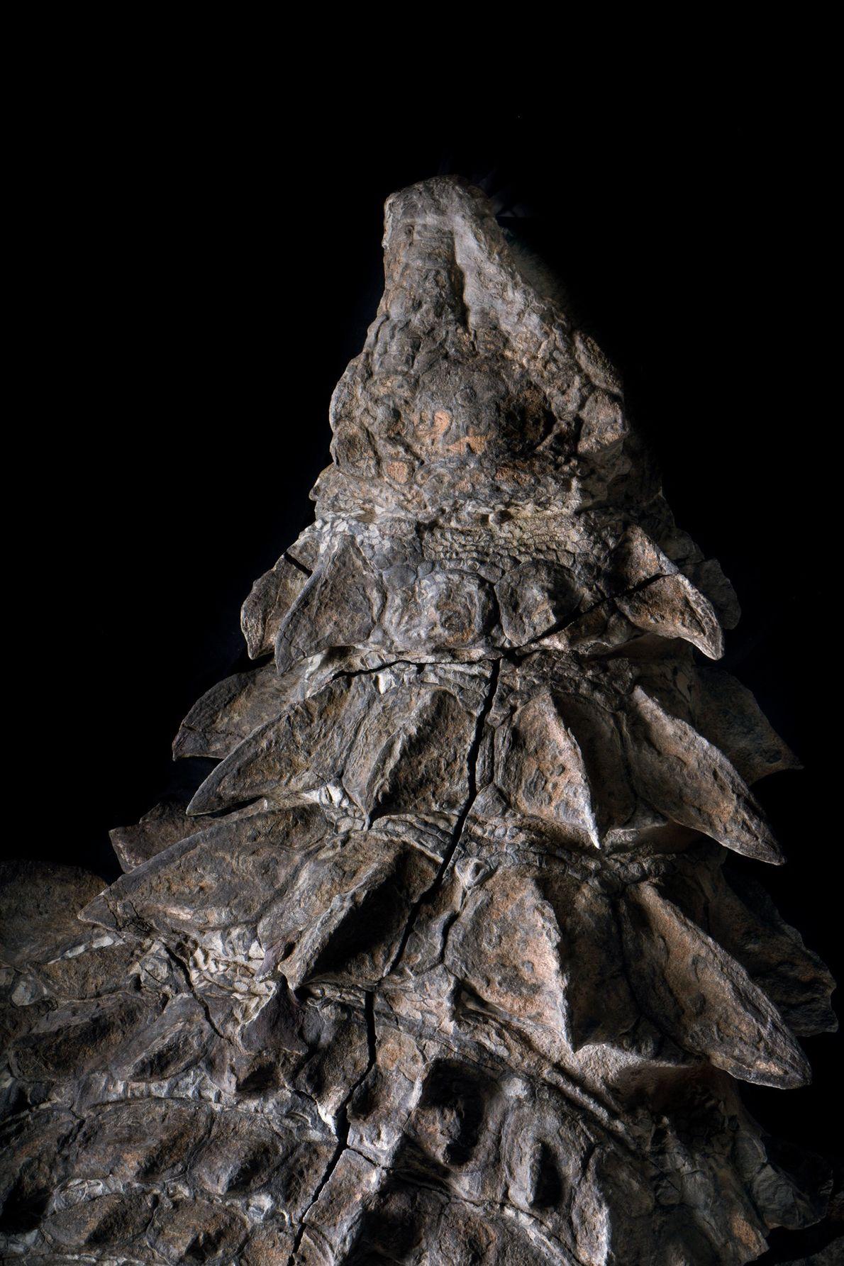 nodossauro-nova-especie-de-dinossauro-fossil-incrivel-04