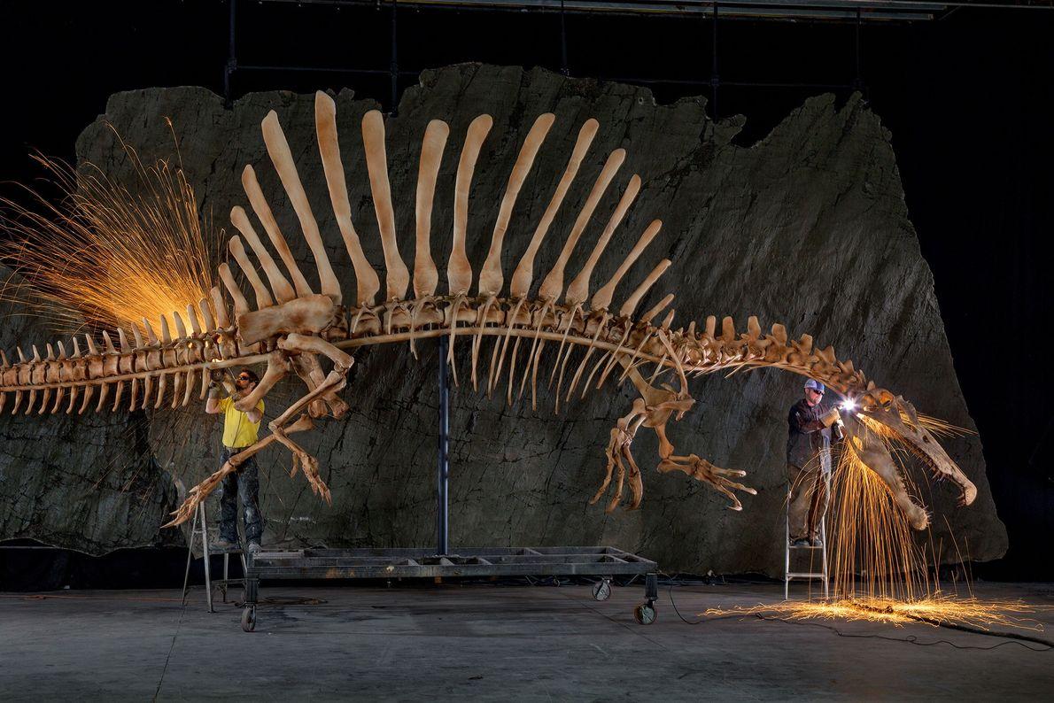 Trabalhadores do setor de exposições dão os retoques finais em uma reconstrução em tamanho real, anatomicamente ...