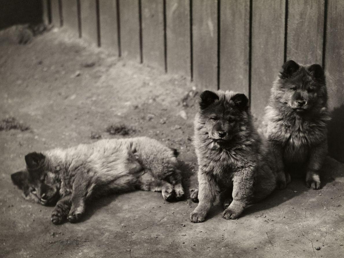 galeria-de-fotos-cachorro