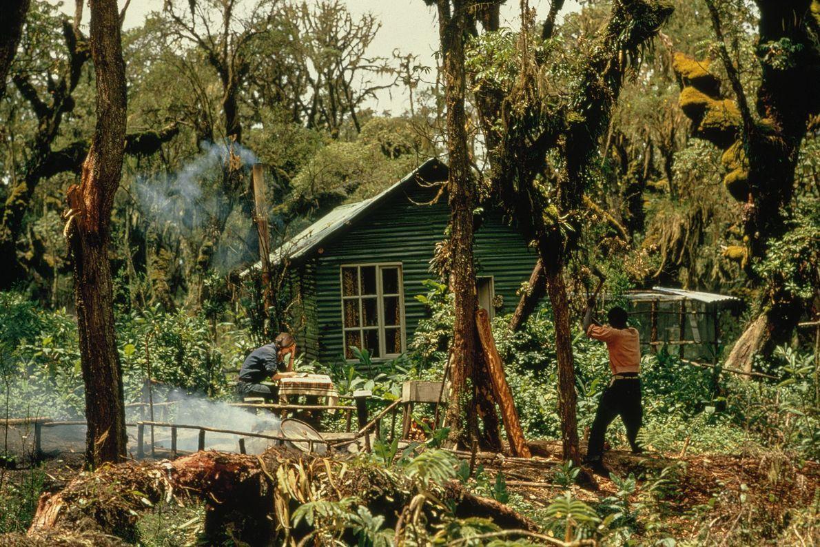 Pesquisadores que visitavam Karisoke, o centro de pesquisa que Fossey instalou no Parque Nacional dos Vulcões, ...