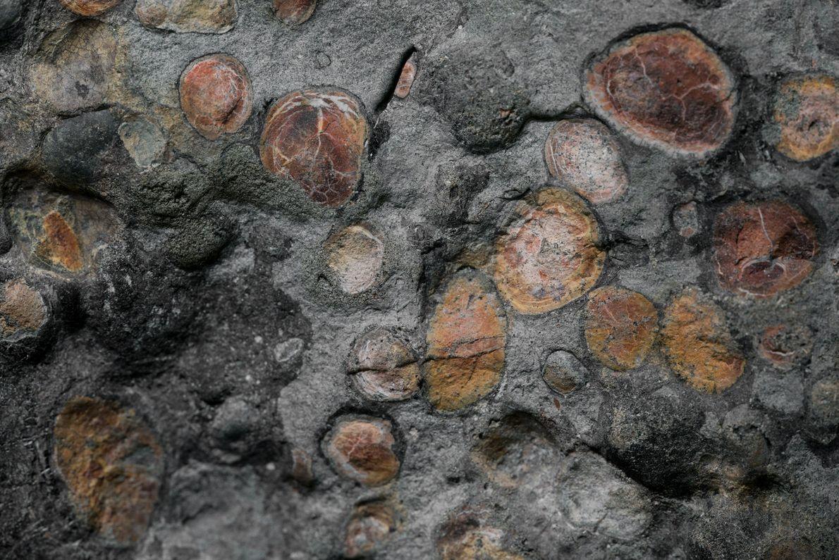 nodossauro-nova-especie-de-dinossauro-fossil-incrivel-05