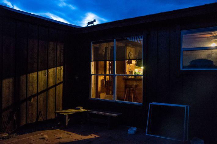 A estrutura do rancho fornecia mais do que abrigo em tardes escaldantes, os filhotes o utilizavam ...