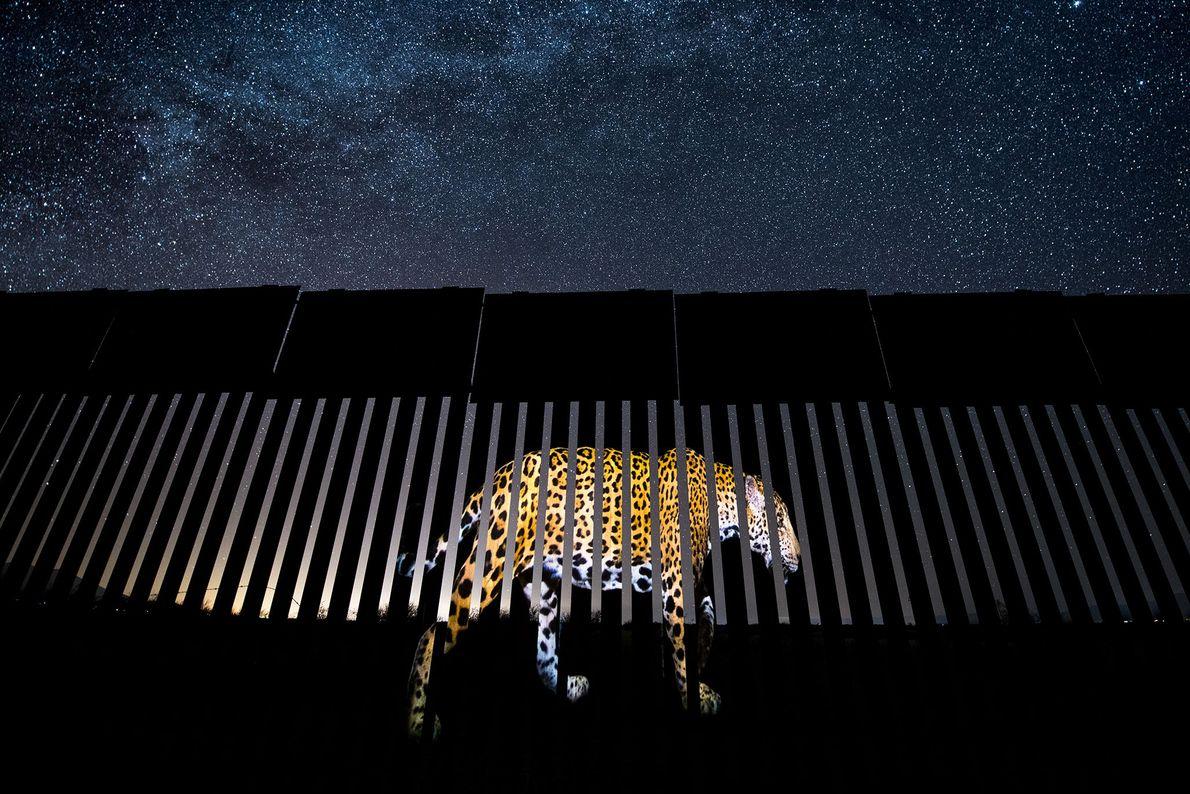 """O fotojornalista mexicano Alejandro Prieto venceu a categoria """"fotojornalismo de vida selvagem em imagem única"""". Ele ..."""