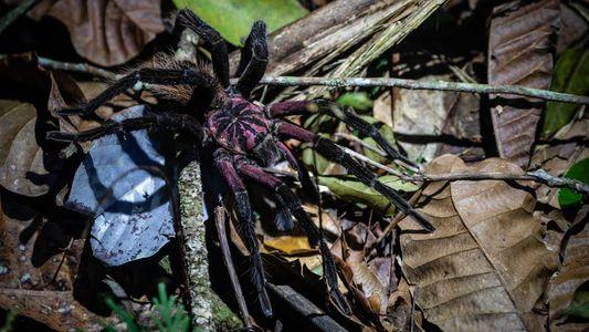 Fotos: Após décadas nas mãos das FARC, floresta colombiana está aberta para exploração