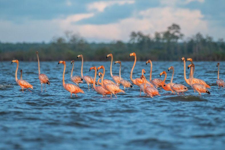A Amazônia é a região do globo mais rica em aves, que colorem os céus, as ...