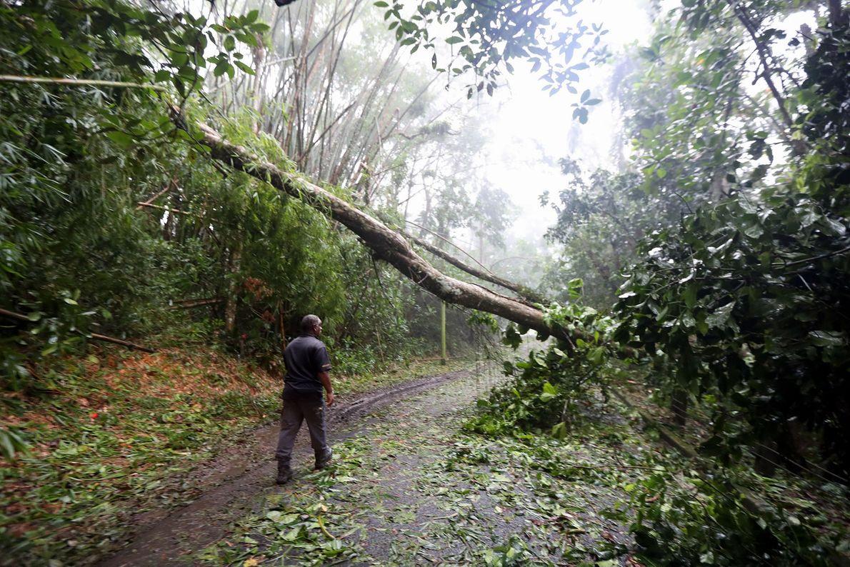 Um homem examina a destruição em uma estrada rural do furacão Irma em Cañaboncito, Porto Rico, ...