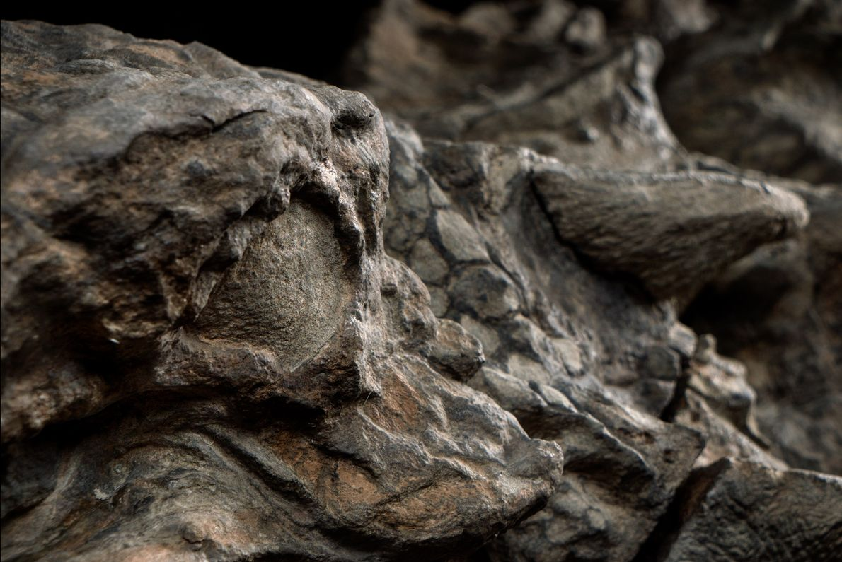 nodossauro-nova-especie-de-dinossauro-fossil-incrivel-09