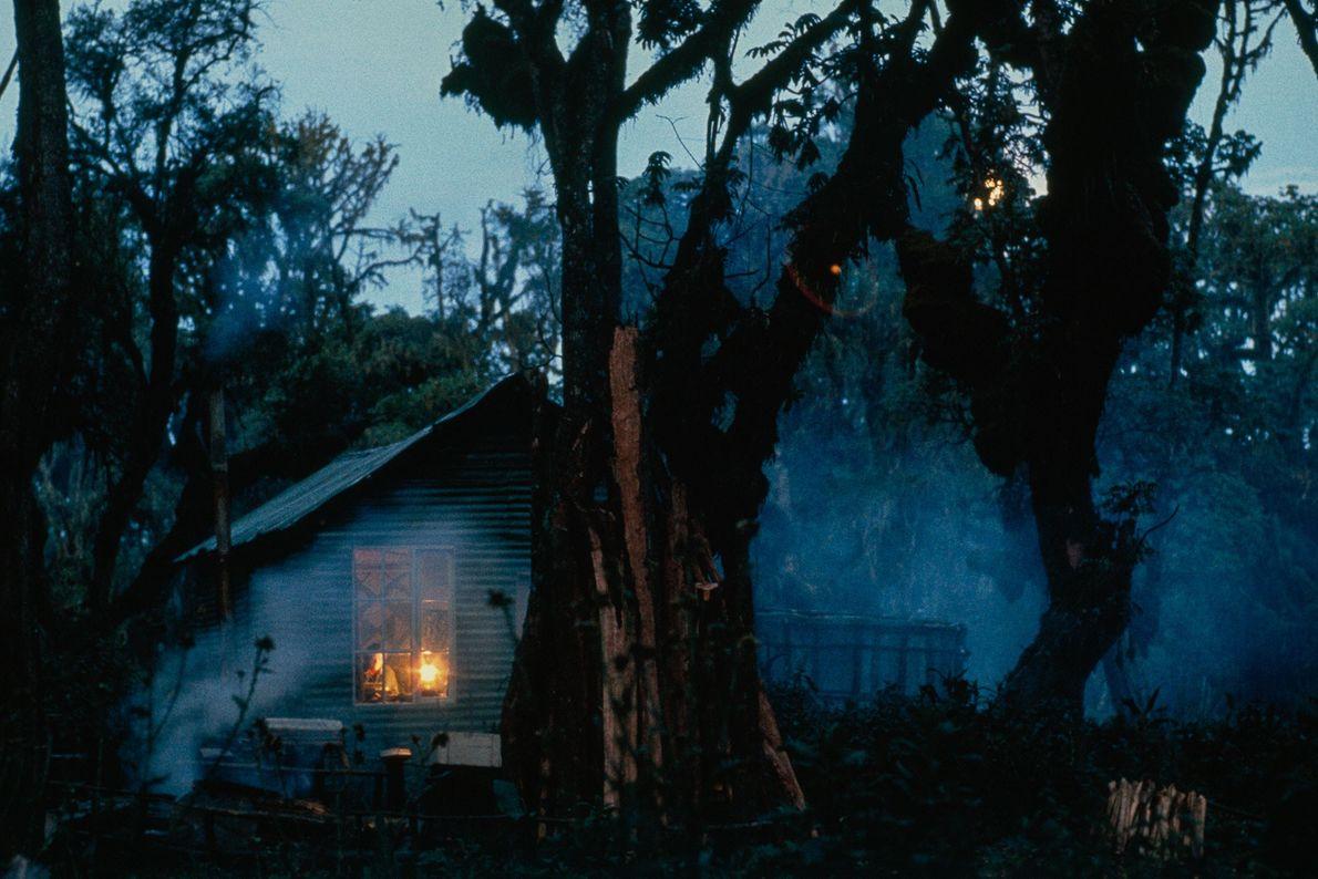 Fossey teve uma vida solitária na floresta até sua morte, em 1985. Segundo um perfil da ...