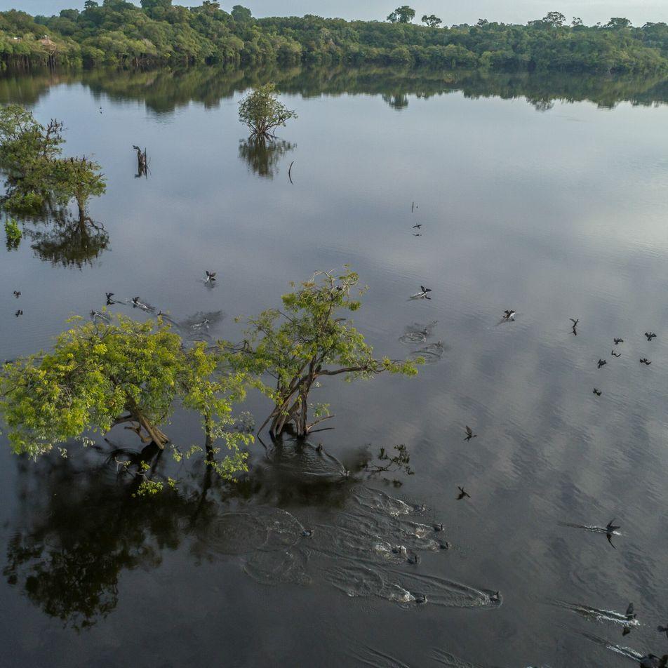 Mudanças climáticas e atividades humanas já ameaçam áreas inundáveis da Amazônia