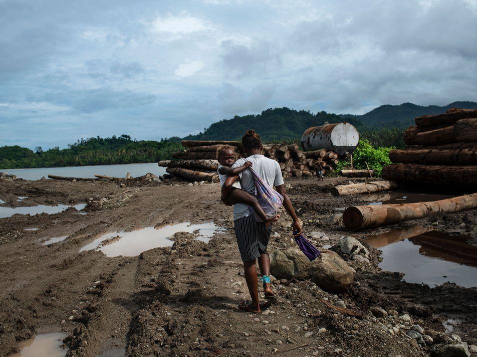 Extração de madeira está corrompendo arquipélago, mas um vilarejo decidiu virar o jogo