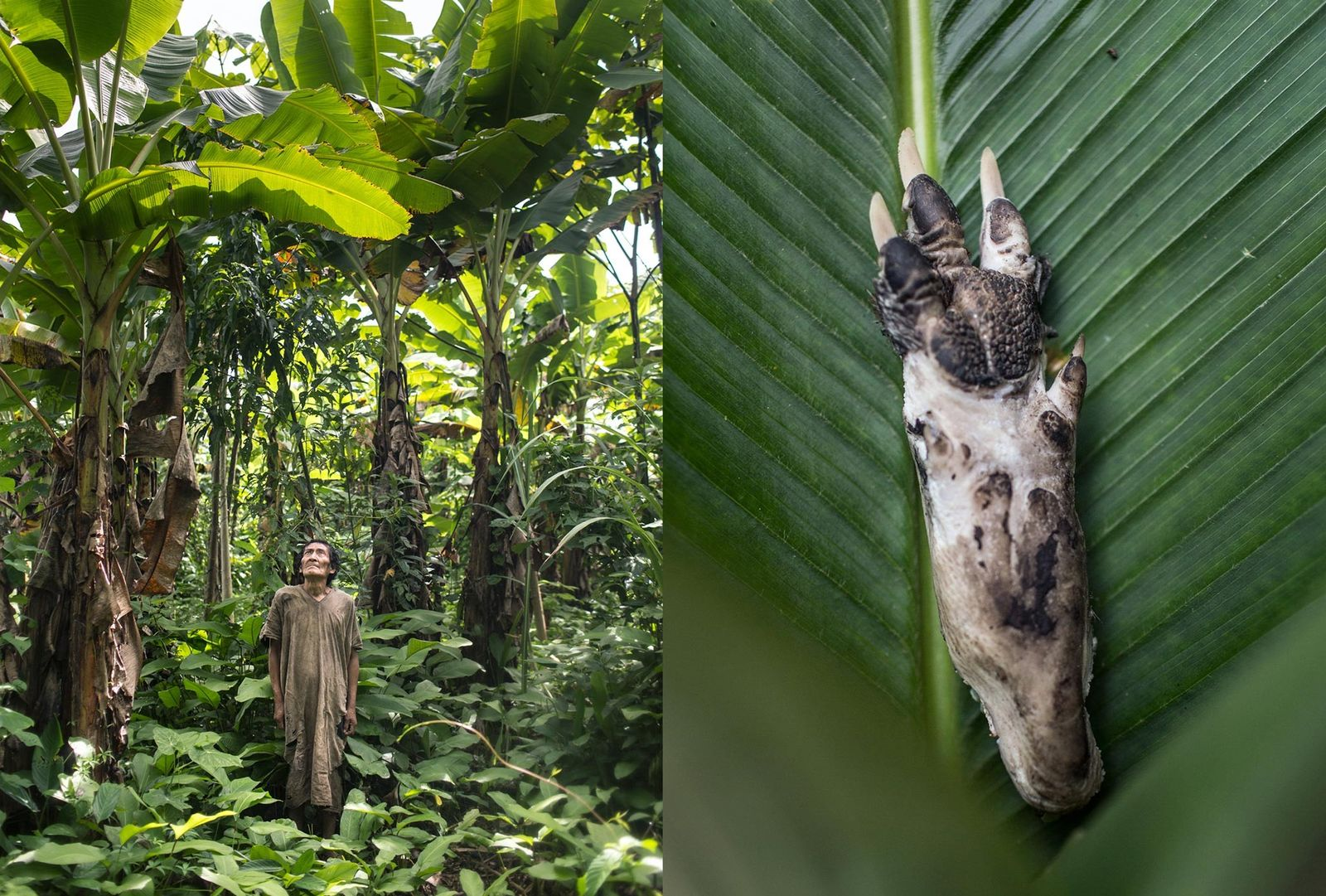 Os Tsimane, da Bolívia, adquirem a maior parte da comida nos rios, na floresta ou em ...