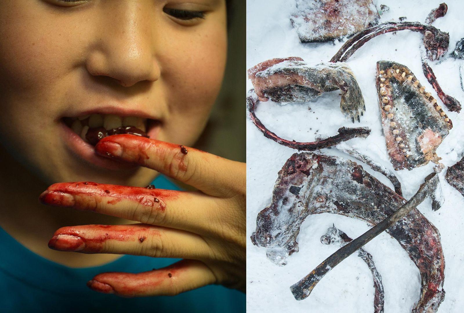 Garota inuíte dá um pedaço de fígado de foca caçado pelo pai ao seu irmão (à ...