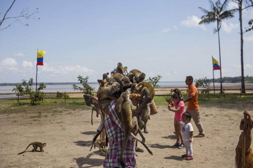 Macacos se empilham sobre mulher em Bogotá, durante uma visita à Ilha do Macaco. Essa espécie ...