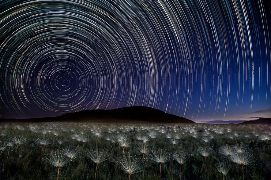 Áreas de Proteção do Cerrado | Sempre-vivas com o céu noturno ao fundo fotografados em longa …
