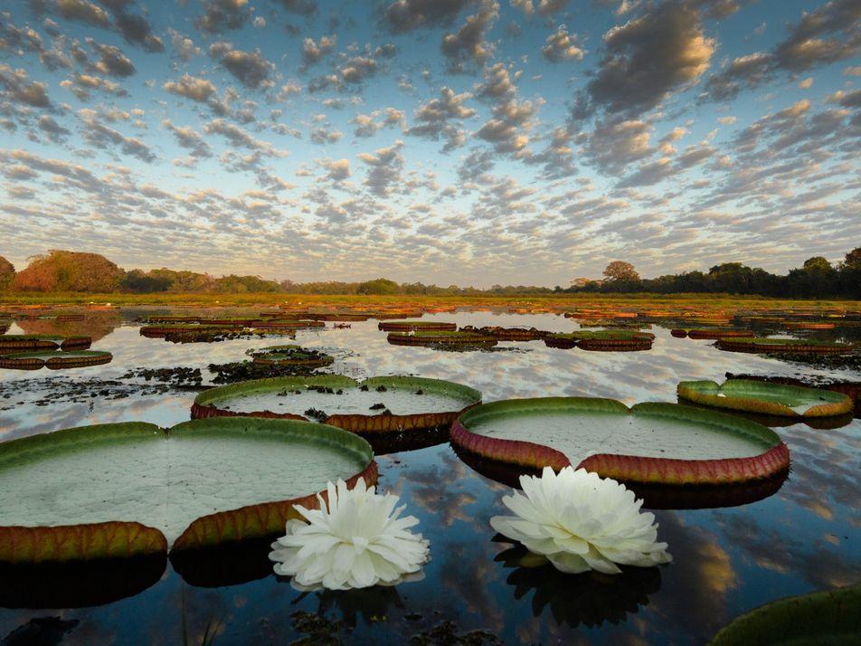 Patrimônios Mundiais, áreas da Amazônia, Cerrado e Pantanal clamam por preservação
