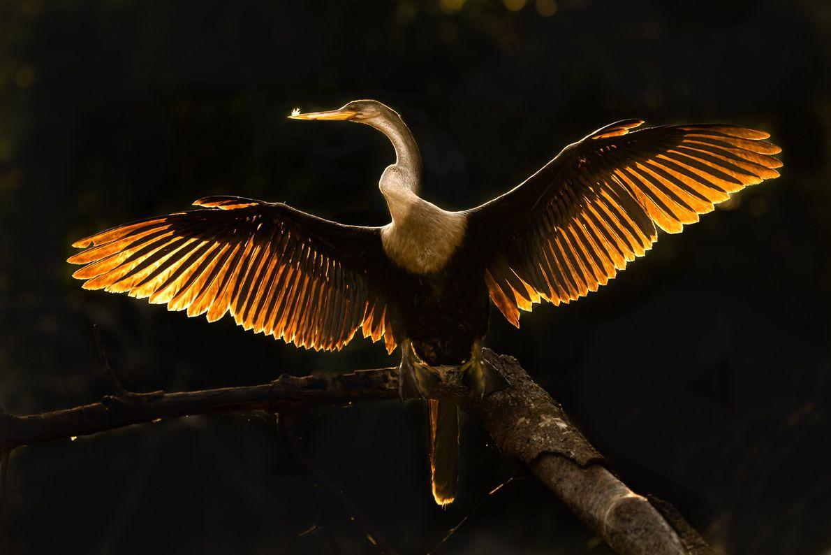 Calor nas asas