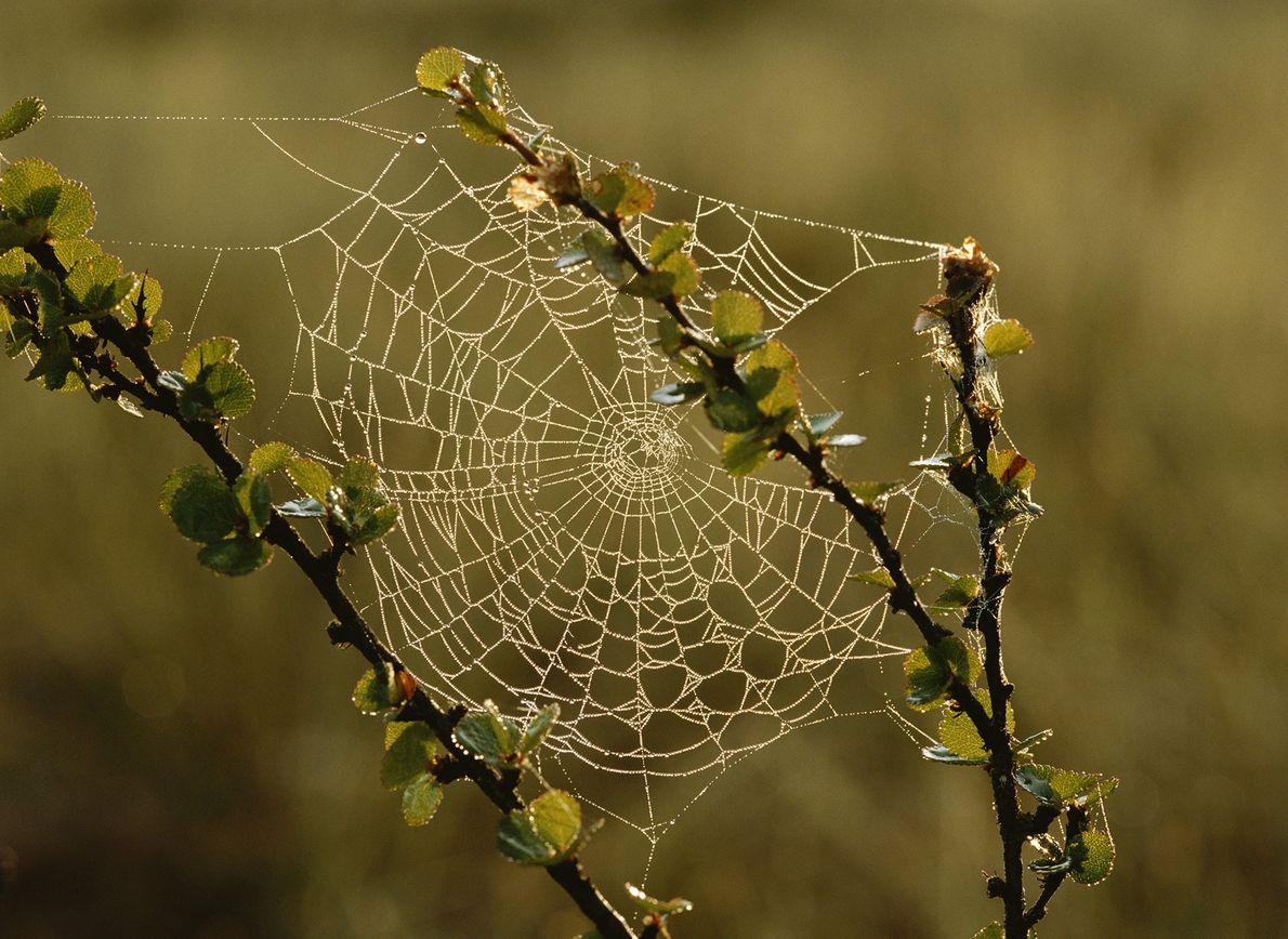 teia de aranha na Suécia