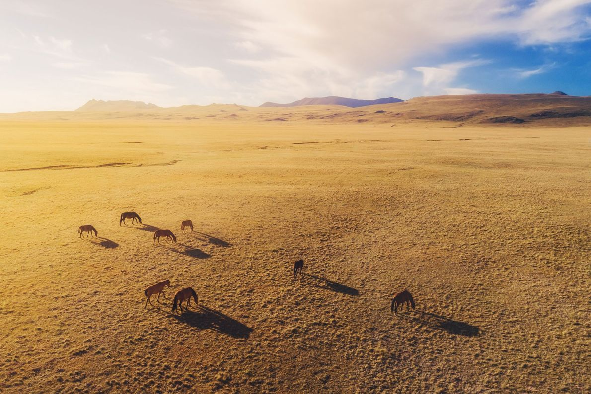 Cavalos juntos no Quirguistão
