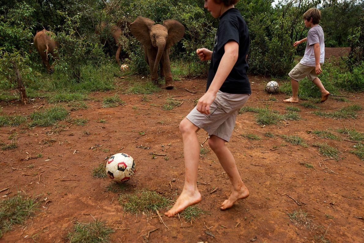 Meninos jogam futebol com filhotes de elefante órfãos no Parque Nacional de Nairóbi, no Quênia, em ...
