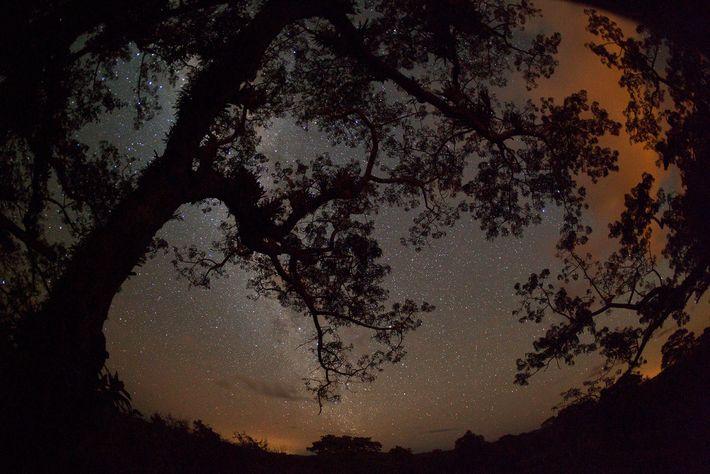 O céu brilha sobre o Yasuní devido à queima de gás em poços de petróleo. Este ...