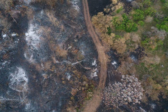 Uma vista aérea de limoeiros destruídos em Roboré ilustra a escala da destruição.
