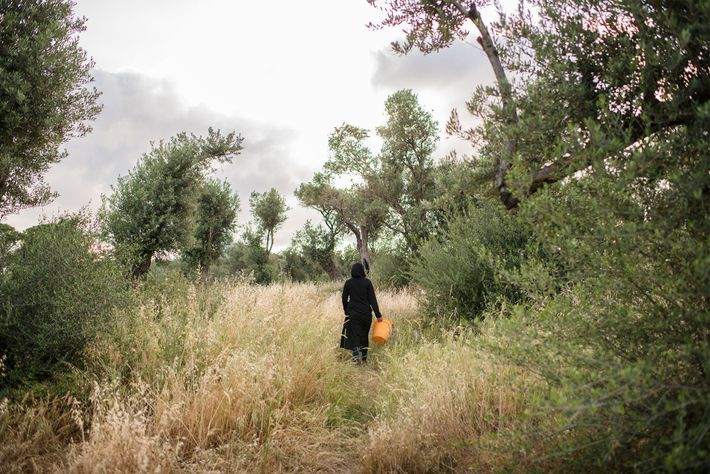 Uma mulher se afasta do Olival com um balde – possivelmente para colher lenha ou para ...