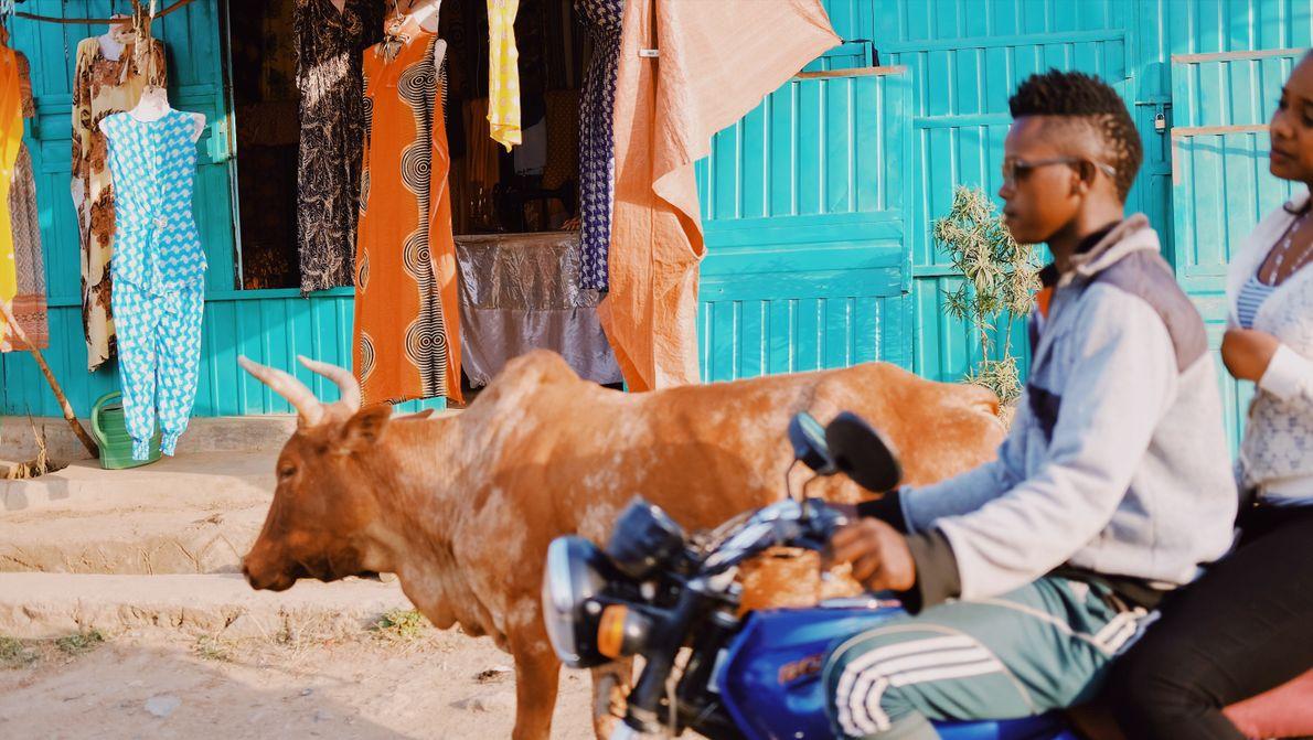 vacas e motos em Jinka, na Etiópia.