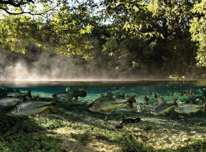 Águas cristalinas - Planalto da Bodoquena