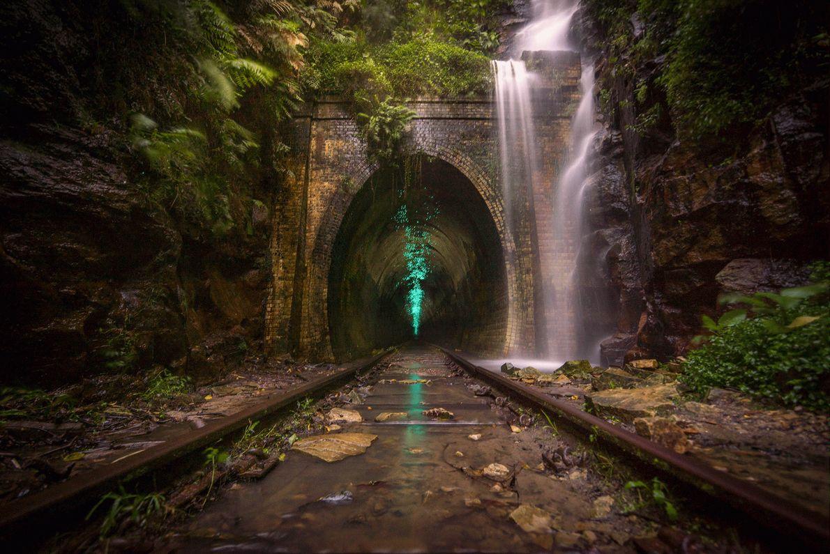 Imagem de pirilampos que iluminam um túnel de trem abandonado na Austrália