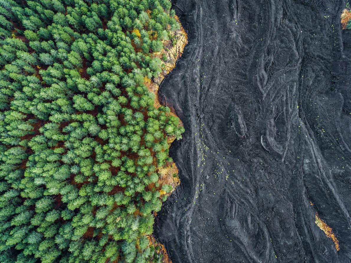 Imagem de lava endurecida ao lado de uma floresta na Sicília