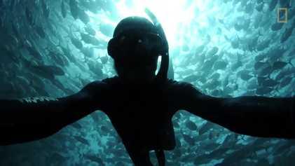 """Confira a sensação de mergulhar em """"tornado"""" de peixes"""