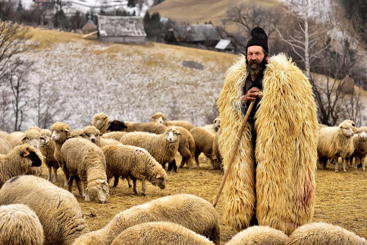 Foto de um pastor em casaco de pele com seu rebanho na Transilvânia