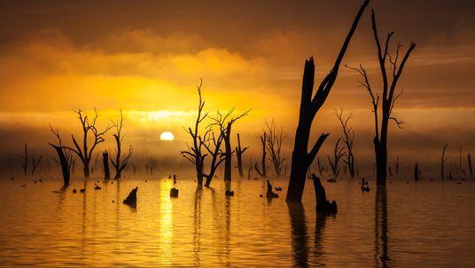 Imagem de árvores mortas em um lago ao nascer do sol