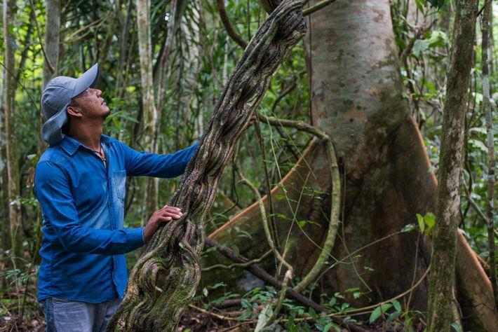 Darlisson Apiaká, morador da Terra Indígena Kayabi/Apiaka, impactada pelas hidrelétricas de São Manoel e Teles Pires. ...