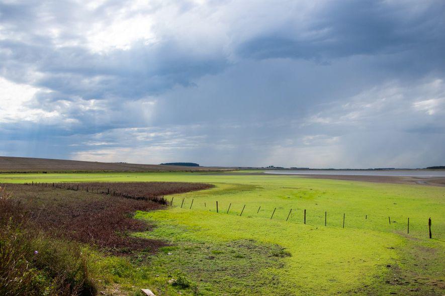 Os campos sulinos contribuem para o sequestro de carbono na atmosfera e no controle da erosão. ...